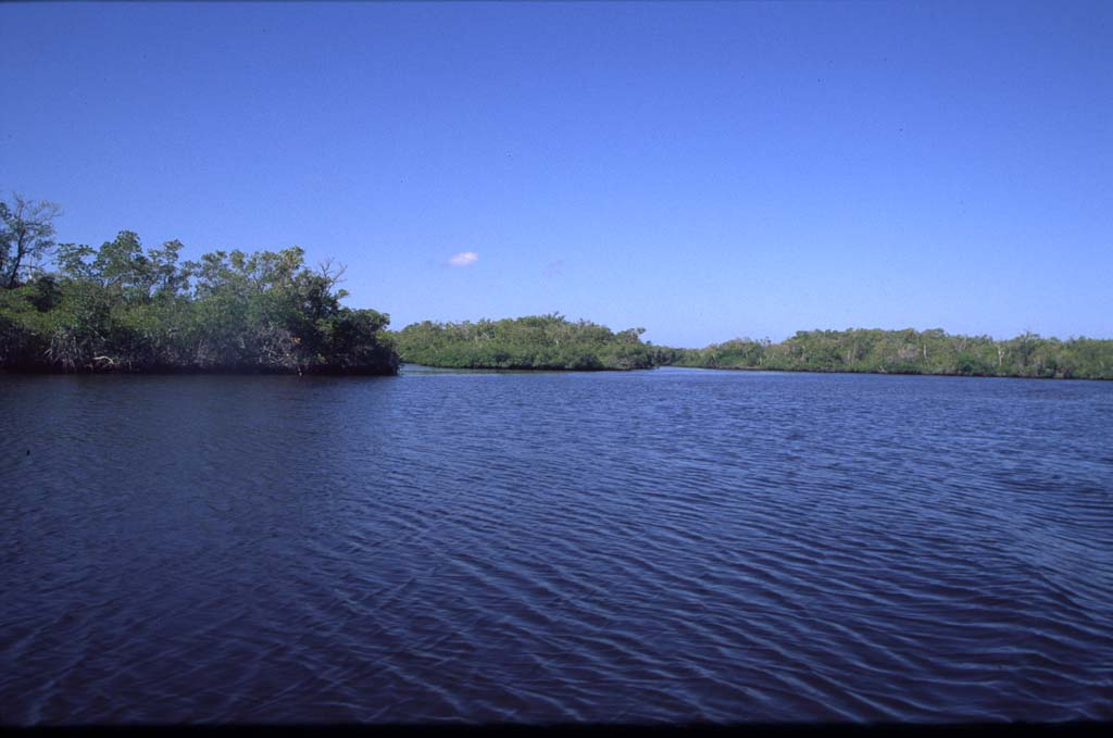 Florida, np, everglades, landschaft, 0079, photo, photos, foto, fotos